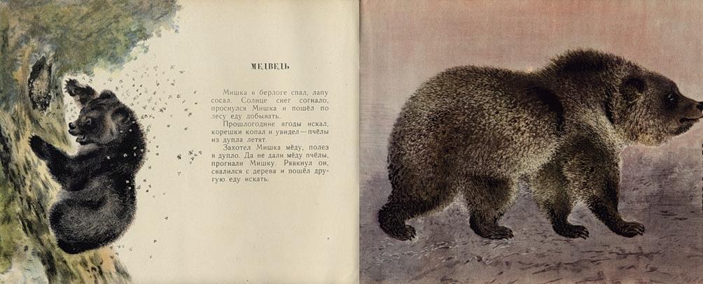 иллюстрации к рассказам чарушина медвежонок строители